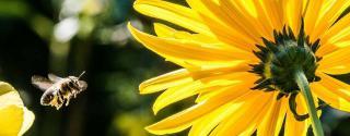 Bijenpollen & Manuka