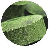 chlorella-bio