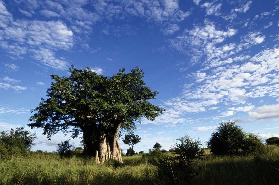 wat doet baobab?