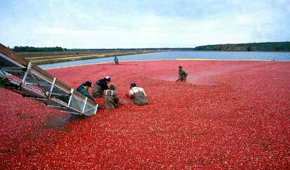 wat doet cranberry?