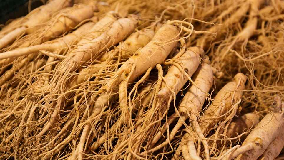 wat is ginseng?