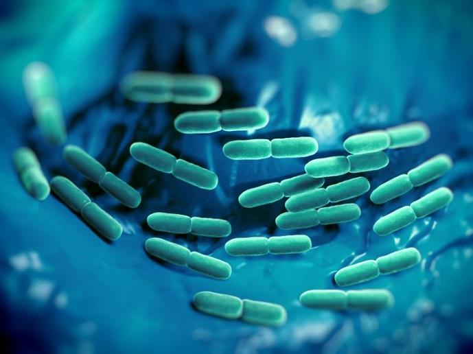 wat is Bifidobacterium Bifidum?