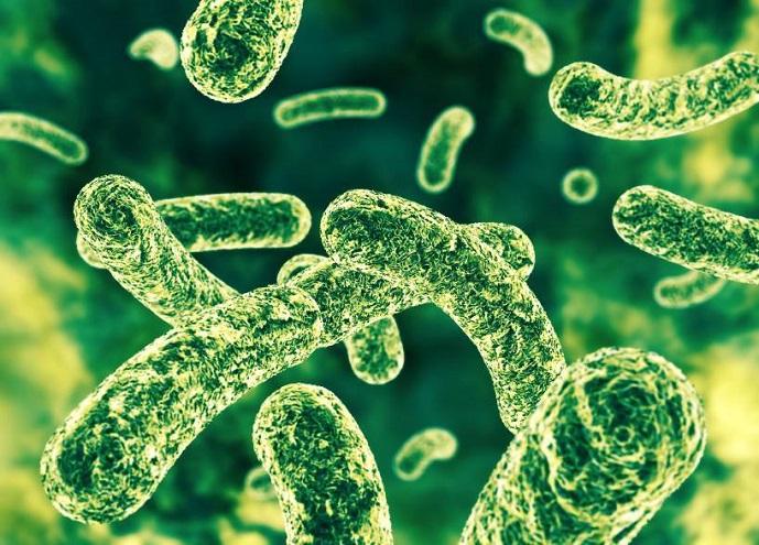 voor wie is Bifidobacterium Infantis?