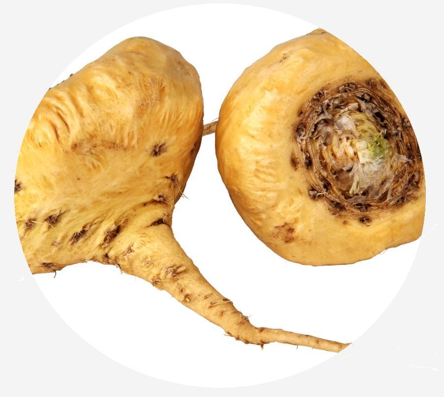 yellow-maca